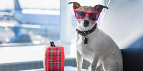 3 Tips for Stress-Free Pet Boarding While on Your Summer Vacation, Columbia, Missouri