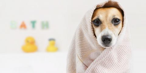 How to Select the Right Dog Shampoo, Columbia, Missouri