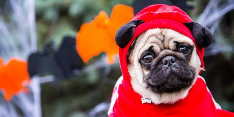 4 Pet Safety Tips for Halloween, Columbia, Missouri
