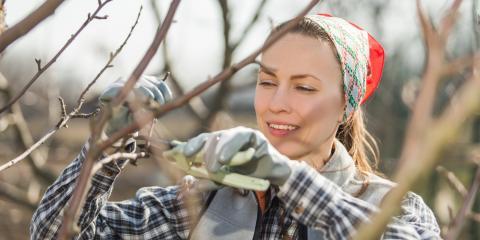 3 Benefits of Dormant Pruning, Columbia, Missouri