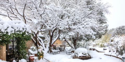 3 Common Tree Problems That Occur in Winter, Jessup, Maryland