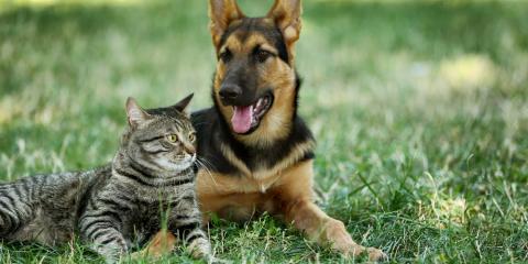 Cat And Dog Hospital Columbia Maryland