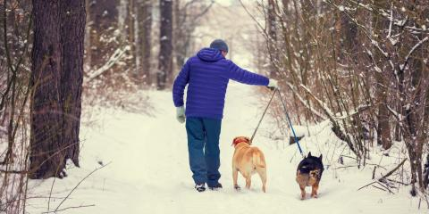 3 Tips for Walking Your Dog in Winter, Columbia, Missouri