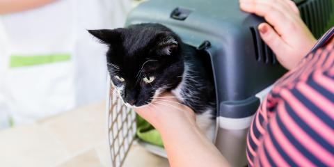 How to Get Your Cat Into a Pet Carrier, Columbia, Missouri
