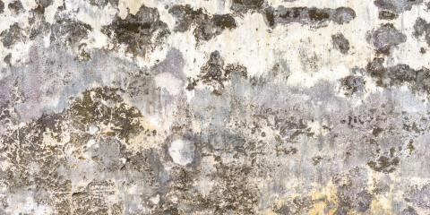 4 Steps to Take Before Starting the Mold Remediation Process, Worthington, Ohio