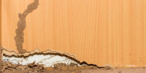 3 Signs You Need Termite Control From a Professional Pest Exterminator, Columbus, North Carolina
