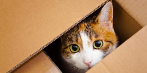 Why Cats Love Boxes So Much, Columbus, Nebraska