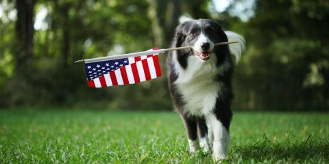 Do's & Don'ts of Keeping Your Pet Safe During the Fourth of July, Columbus, Nebraska