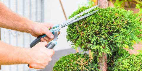 4 Ways Tree Trimming Will Improve Your Home's Appearance , Commerce, Georgia