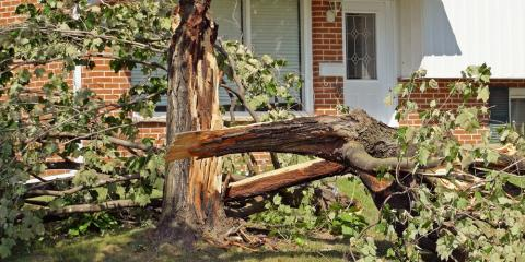 What Are the Signs You Need Emergency Tree Service?, Commerce, Georgia