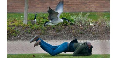 Are Canada Geese Ruining Your Business? Call Animal Remover, Anderson, Ohio