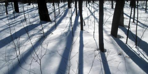 Protect Your Trees From Winter Damage in Anchorage With Expert Lawn Maintenance, Anchorage, Alaska