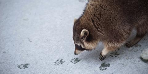 Why Is Pest Control Important in the Winter?, Mooresville, North Carolina