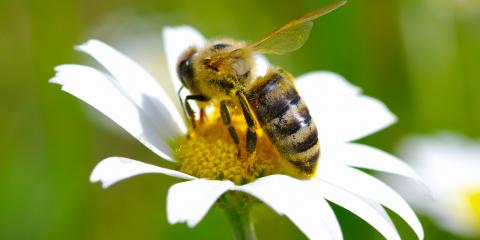 A Brief Guide to Bee Stings, Concord, North Carolina