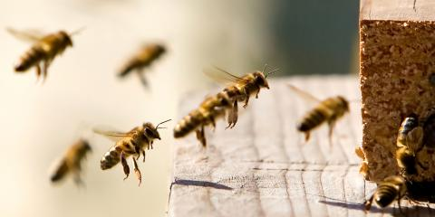 What Are the Differences Between Wasps, Bees & Hornets?, Concord, North Carolina