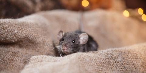 Does a Single Rodent Sighting Warrant Pest Control?, Mooresville, North Carolina