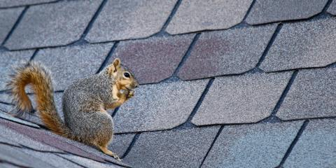 3 Tips for Removing Squirrels From Your Attic, Mooresville, North Carolina