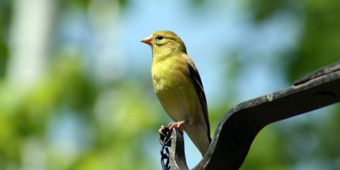4 Ways to Create a Bird-Friendly Landscape, Danley, Arkansas
