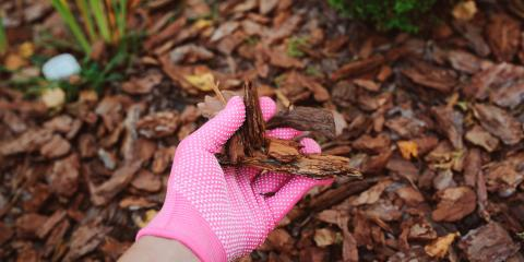 Why You Need Mulch in the Fall, Danley, Arkansas