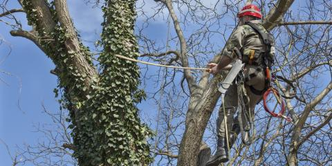 What Is Tree Cabling & Why Is It Done?, 9, Tennessee