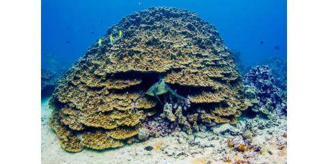 5 Fun Facts About Hawaii's Coral Reefs for Your Marine Education, Waianae, Hawaii
