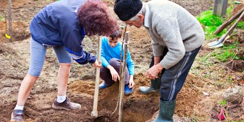 A Guide to Tree Planting for Septic Tank Owners, Corbin, Kentucky