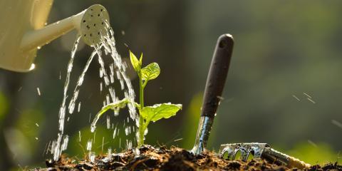 Expert Arborist Describes the Signs of Overwatering & Underwatering Trees, Baldwin, Georgia