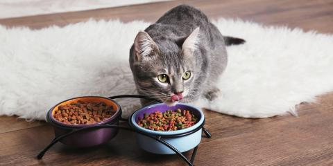 Pamper Your Pet With These Discounted Treats & Vitamins, Robertsville, New Jersey