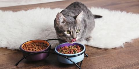 Pamper Your Pet With These Discounted Treats & Vitamins, Seattle, Washington