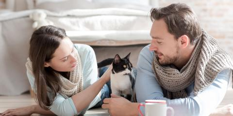 Legal Advice: 3 Tips on Post-Divorce Care for Your Pets, Concord, North Carolina