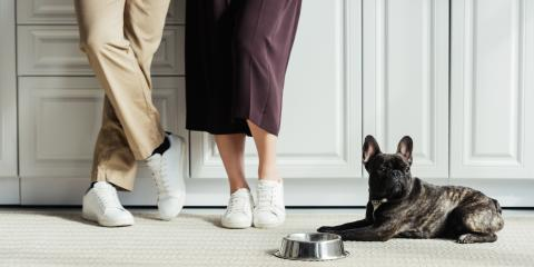 What Happens to a Pet During a Divorce?, St. Petersburg, Florida