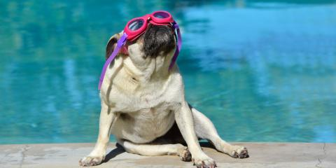 5 Pet Care Tips for Keeping Your Furry Friend Cool This Summer, Cincinnati, Ohio