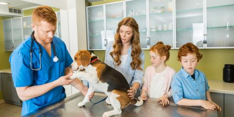 5 Dog Emergencies That Warrant Immediate Attention From a Veterinarian, Cincinnati, Ohio