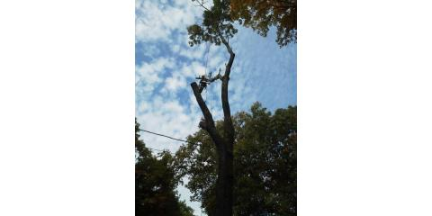 Dr. Schultz Home & Tree Services LLC, Tree Service, Services, Danbury, Connecticut