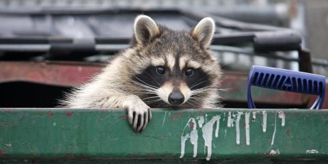 Critter Getter, Animal Removal, Services, Daleville, Alabama