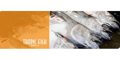 Tropic Fish Hawaii LLC, fishing, Services, Honolulu, Hawaii