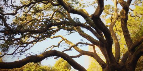 Timeless Tree Care Advice From the Gurus at Lamb Tree Services, Dexter, Kentucky