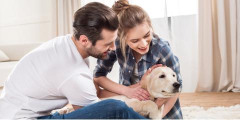 5 Important Tips to Prepare Your Dog for Pet Boarding, Covington, Kentucky
