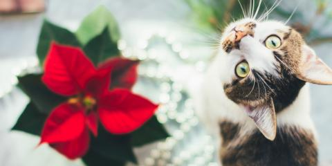 Pets & Plants: How to Keep Your Animals Safe This Holiday Season, Covington, Kentucky