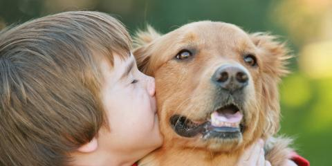 How Animal Laser Therapy Benefits Your Pet, Covington, Virginia