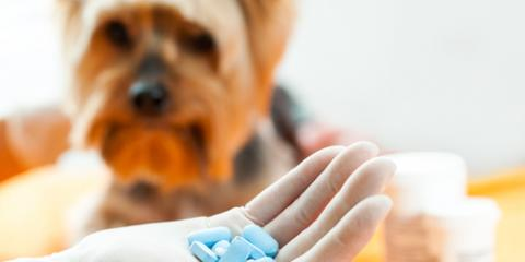 3 Veterinarian-Approved Tips for Getting Pets to Take Their Medicine, Covington, Kentucky