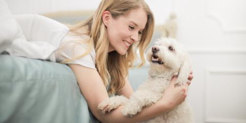 5 Dog Behavioral Issues to Discuss With Your Veterinarian, Covington, Kentucky