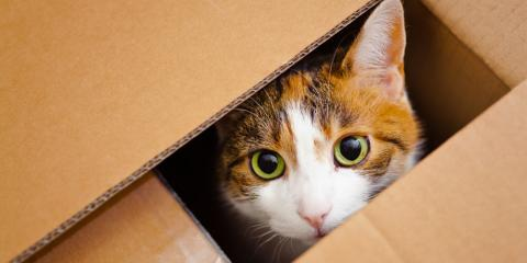 Veterinarian Explains Why Cats Are Obsessed With Boxes, Covington, Kentucky