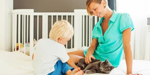 3 Veterinarian-Approved Tips for Bringing Home a New Cat, Covington, Kentucky