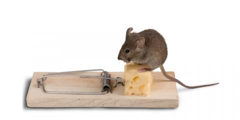 5 Rodent Control Tips For the Winter Months, Caddo Mills, Texas