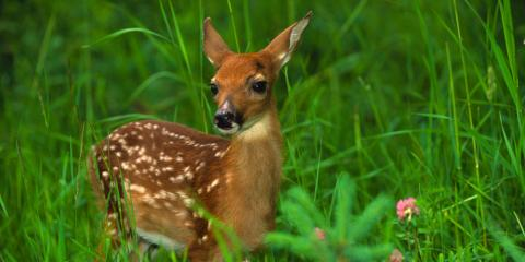 Wildlife Removal Guide: What to Do When You See a Fawn in Your Yard, Miami, Ohio