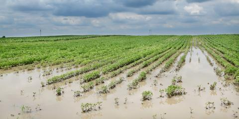 How Flooding Affects Crops, Beatrice, Nebraska