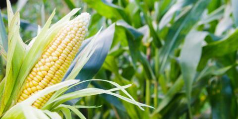 4 Reasons Why You Need Crop Insurance , Beatrice, Nebraska