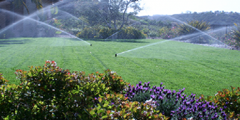 Show Your Lawn Some Love With a New Irrigation System, Cincinnati, Ohio