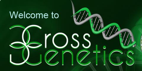 Cross Genetics Explains How Medical Marijuana Helps Manage Health Conditions, Denver, Colorado